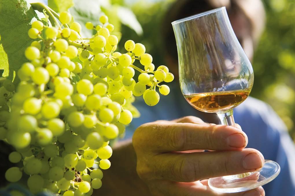 cognac vignoble charentais charente en croisiere inter croisieres sireuil nicols.jpg