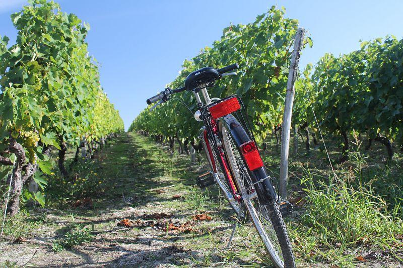 CDT17 vignes velo charente en croisiere bateaux nicols inter croisieres sireuil.jpg