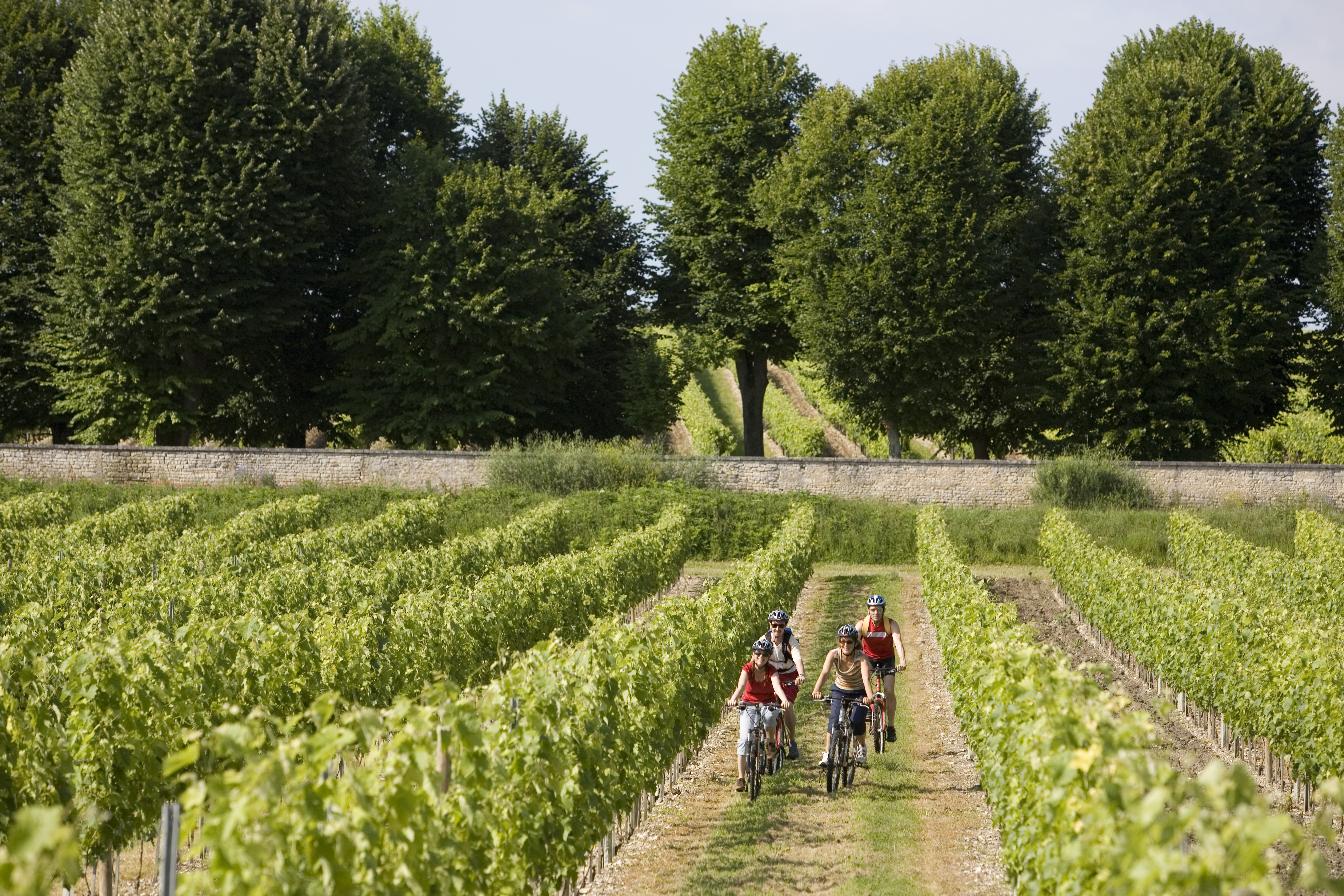 randonne vtt dans les vignes en croisiere bateaux nicols inter croisieres sireuil.jpg