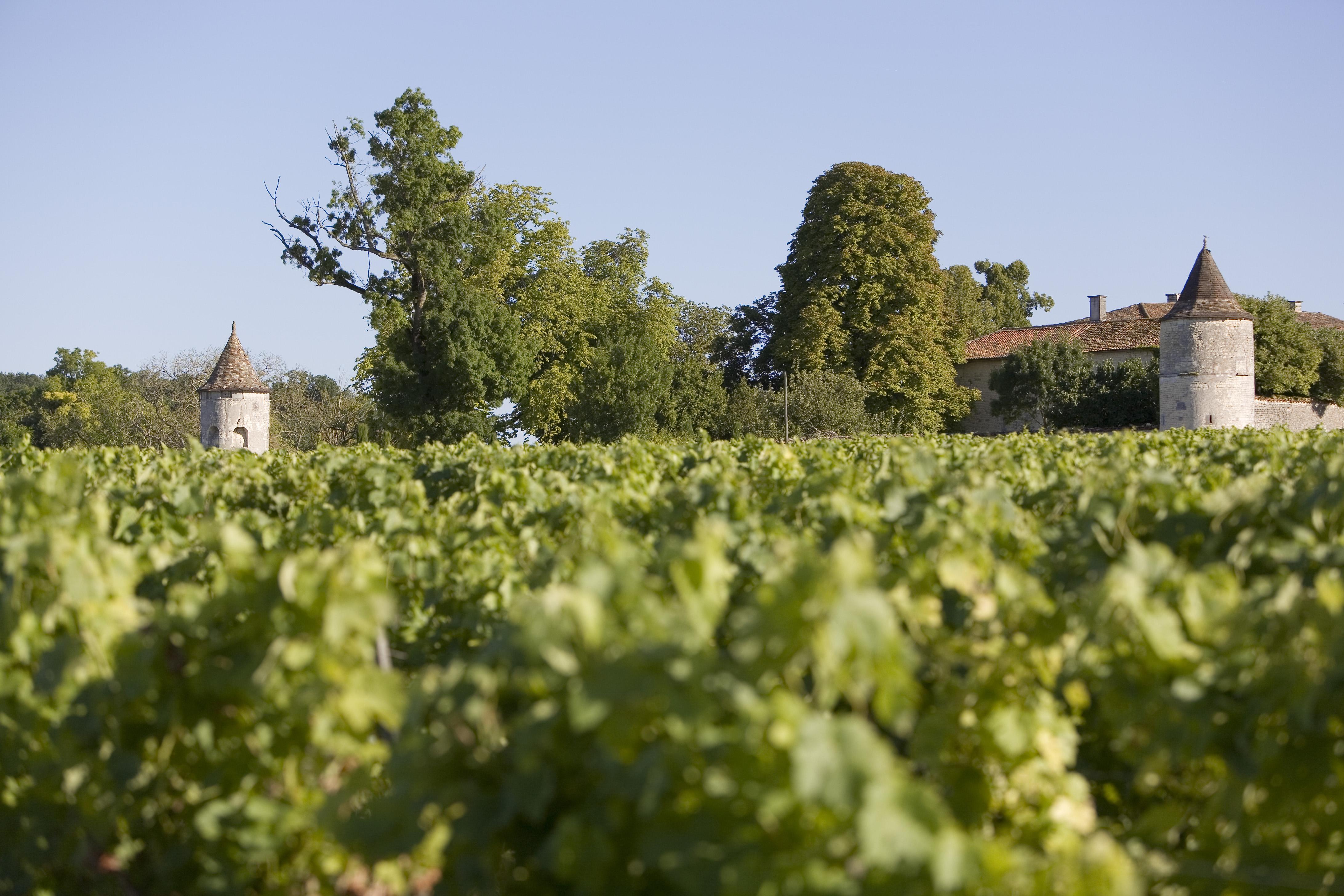 vignes ouzounoff en bateau charente en croisiere inter croisieres sireuil nicols.jpg